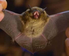 Štola Johannes, zimní domov netopýrů na Božím Daru